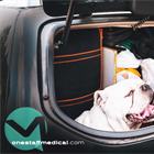 TRAVELER? HERE'S HOW TO FIND PET-FRIENDLY HOUSING FOR YOUR NEXT ASSIGNMENT